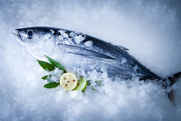 Albacore fish (Tunnus Alalunga) albacore on ice background tuna seafood stock pictures, royalty-free photos & images