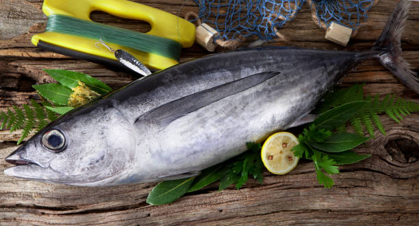 Albacore fish (Tunnus Alalunga) Albacore caught in sport fishing tuna seafood stock pictures, royalty-free photos & images