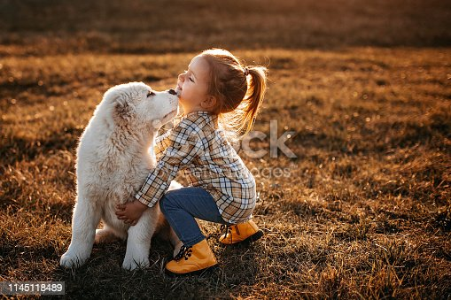 Albai dog running to catch girl in meadow