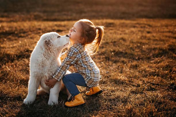 Albai dog is my favourite stock photo
