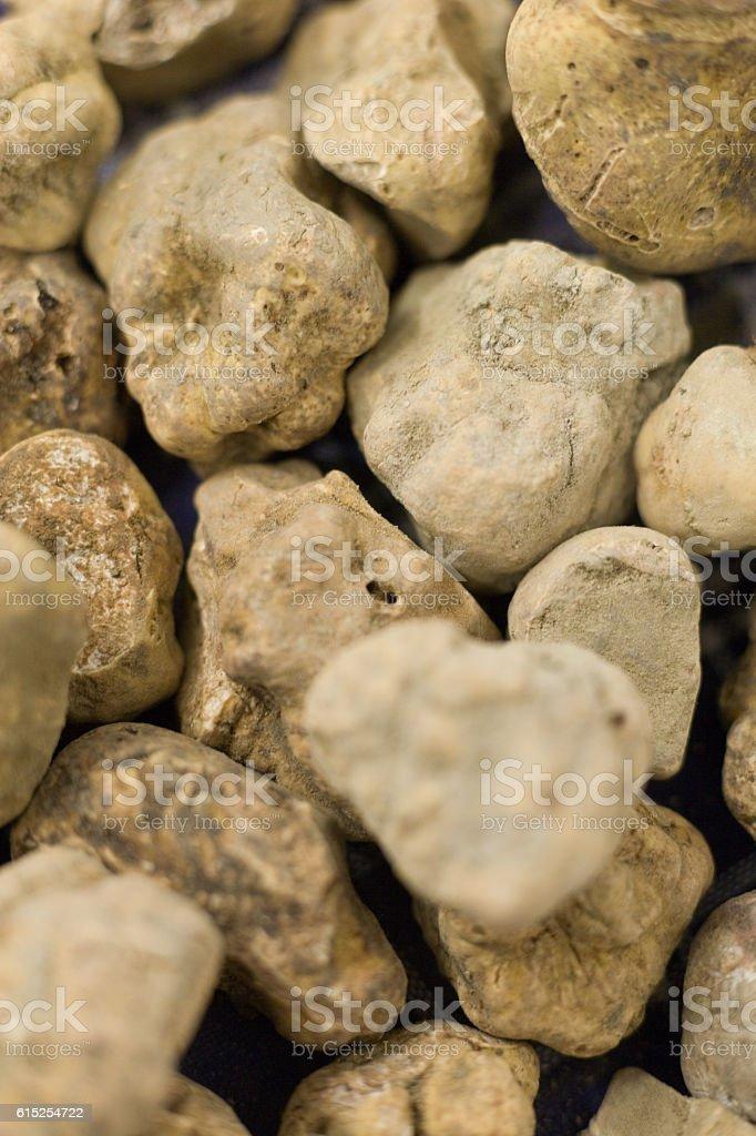 Alba's white truffle stok fotoğrafı