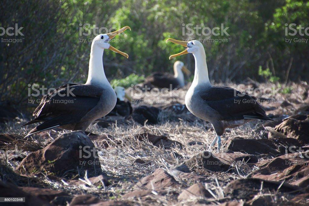 Albatros de pájaro - foto de stock