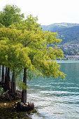 Alberi nel lago (lombardia, Italia)