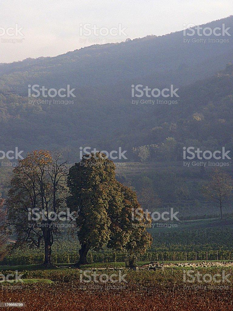 Alberi royalty-free stock photo