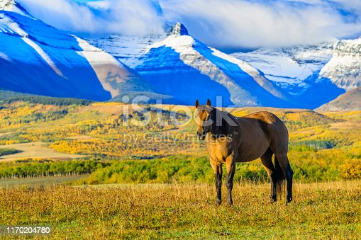 Horse ranch in Rural Alberta Canada