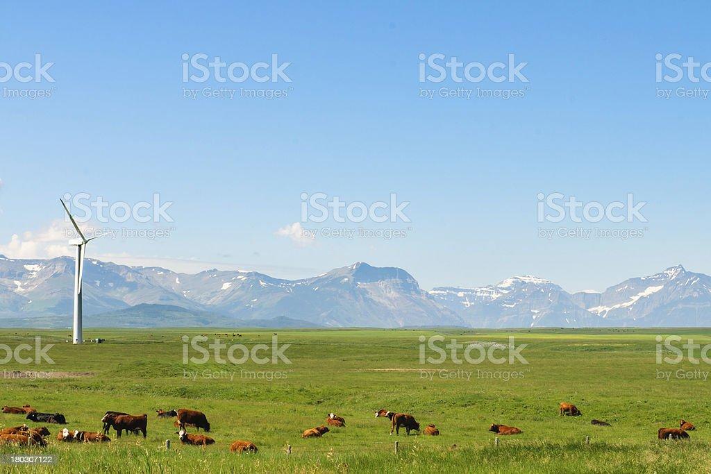 Alberta Farmland stock photo