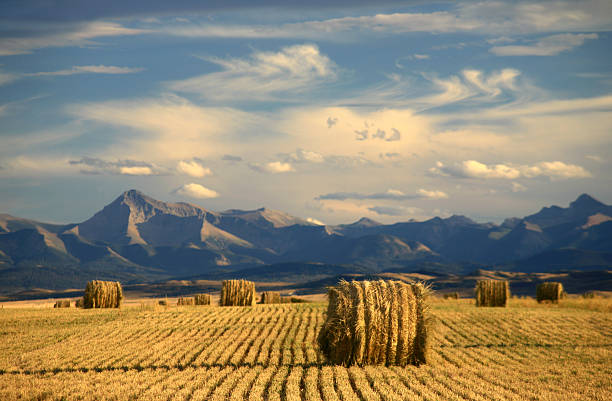 Alberta Scenic With Agriculture and Harvest Theme stock photo