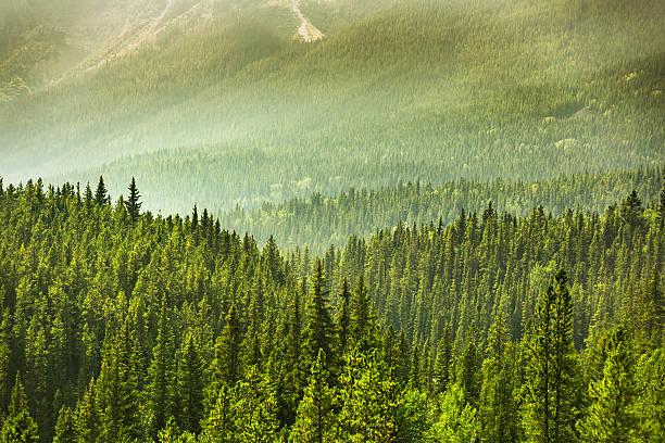 Alberta Wilderness near Banff stock photo