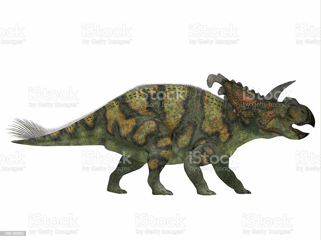 Albertaceratops on White royalty-free stock photo