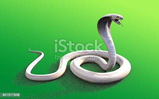 istock Albino king cobra snake 641517848