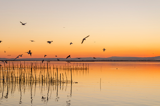 Albufera Natural Park in Valencia (Spain)