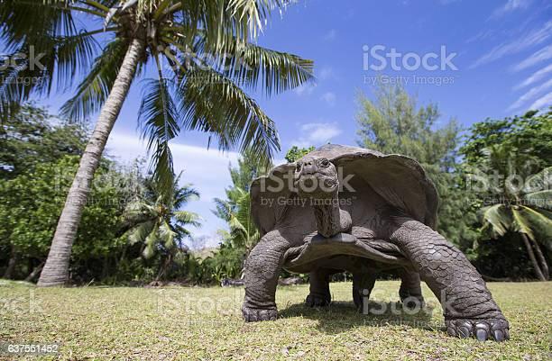 Aldabra giant tortoise in seychelles picture id637551452?b=1&k=6&m=637551452&s=612x612&h=q7 jqqu ca70s5d7eph  e1ru6n8hbsz vd mqtvqem=
