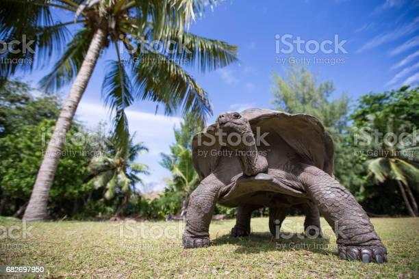 Aldabra giant tortoise in seychelles picture id682697950?b=1&k=6&m=682697950&s=612x612&h=k2ajzr74thtkbu3x9gnll7hgh3yllkcklmb7gl ub4e=