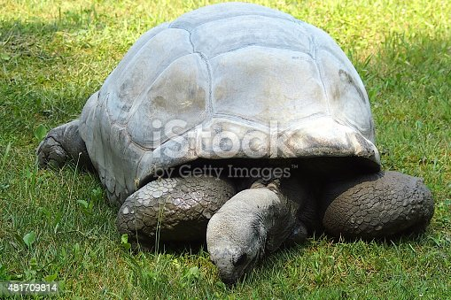 istock Aldabra giant tortoise 481709814