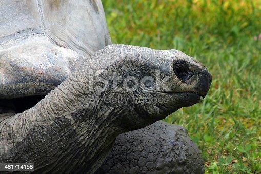 istock Aldabra giant tortoise 481714158