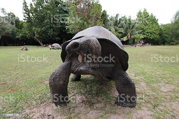 Aldabra giant tortoise with open mouth aldabrachelys gigantea picture id178885109?b=1&k=6&m=178885109&s=612x612&h=na aohrikyhdizvd 5ddld2b7m9f4apnpy6xkqsqww8=