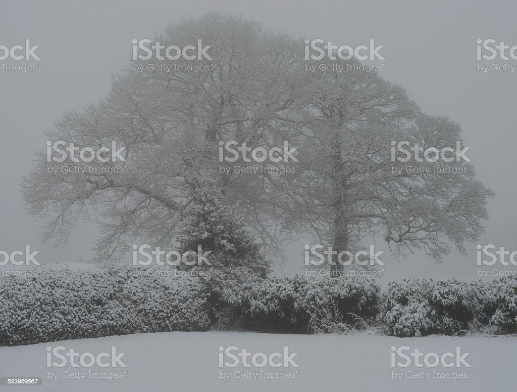 Alderley Edge in the Snow 2 stock photo