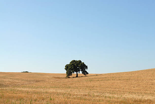 Alentejo - Portugal stock photo