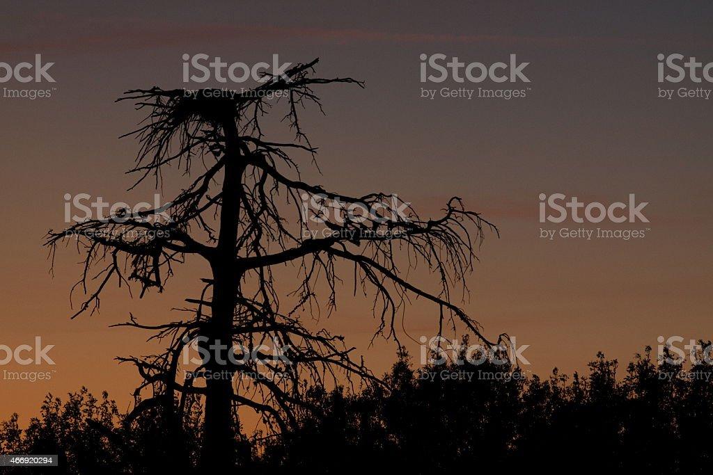 Alentejo Sunset stok fotoğrafı