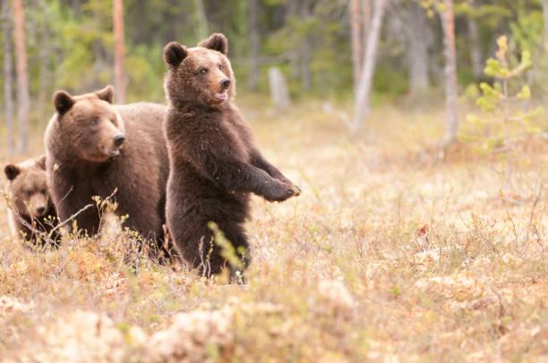 곰 경고 합니다. 스톡 사진