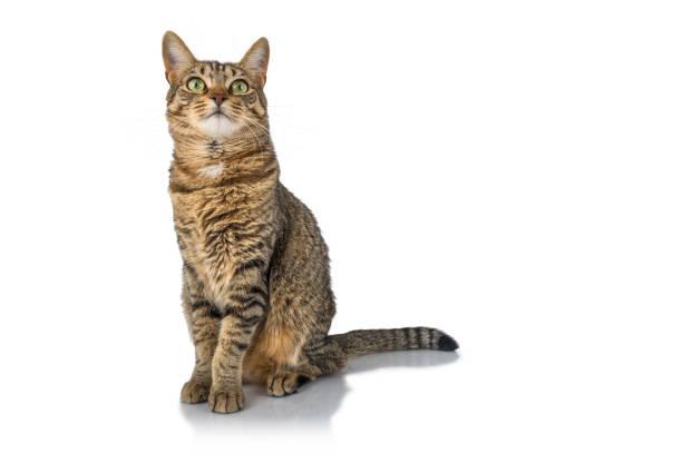 Alert Katze – Foto