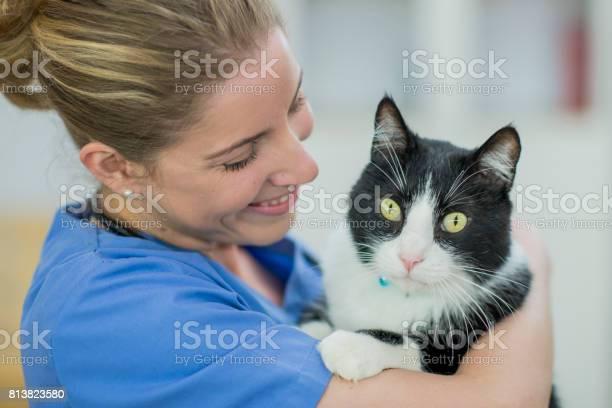 Alert cat picture id813823580?b=1&k=6&m=813823580&s=612x612&h=gyrpvdxd7tyibanr1ki ax5xrat69b7thanbyqrsrdg=