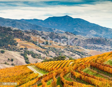 Amber vineyards paint the sides of the Alexander Valley, with Mount St. Helena in the background. Sonoma County, California, USA