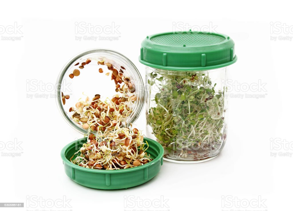 Alfalfa and lentil sprouts stock photo