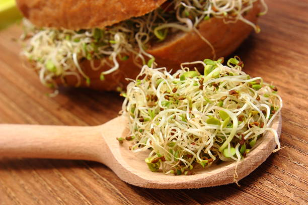 alfalfa and radish sprouts on spoon and wholemeal bread roll in background - erba medica foto e immagini stock
