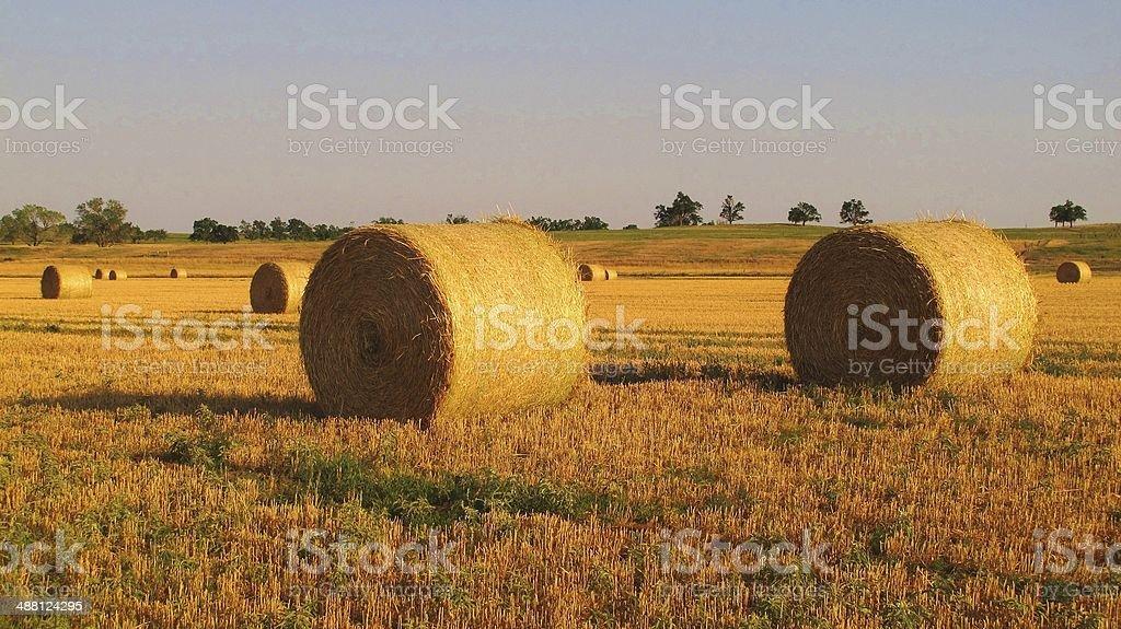 Alfalfa Bales 2 stock photo