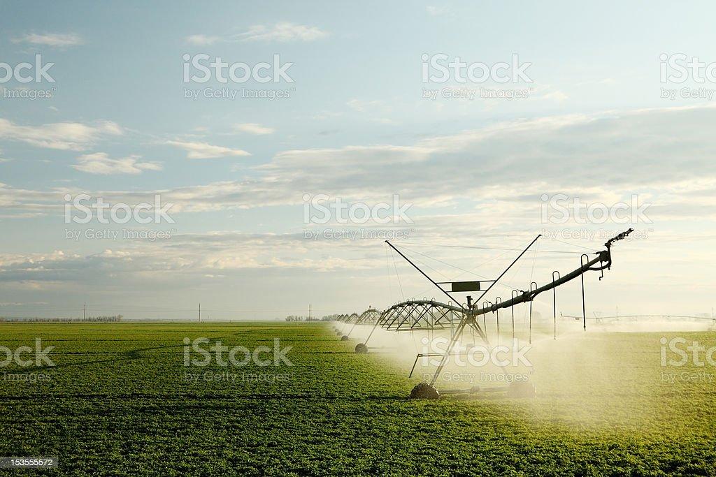 Alfalfa field irrigation stock photo