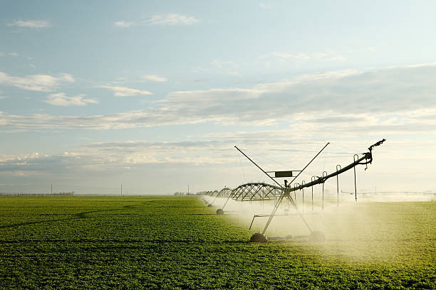 Alfalfa field irrigation stock photo