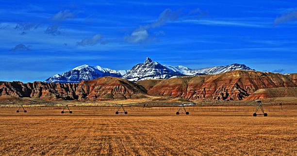 Alfalfa field near Dubois Wyoming stock photo