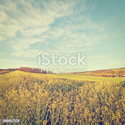 Alfalfa Field and Small Town on the Background of Snow-capped Alps in Switzerland, Retro Effect