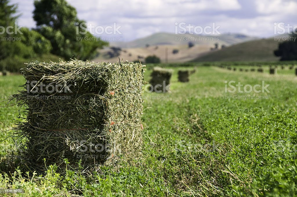 Alfalfa Harvest stock photo