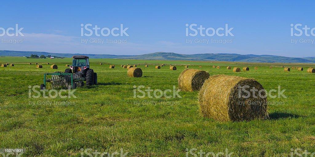 Alfalfa hay bales stock photo