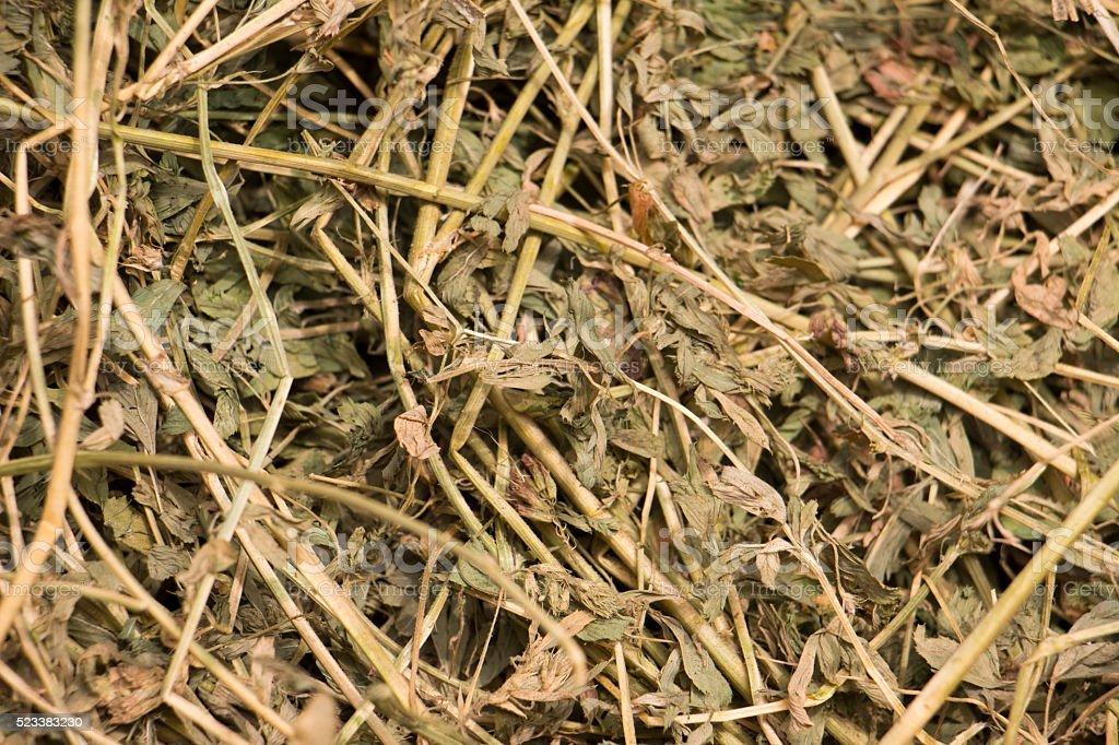 Alfalfa Hay stock photo