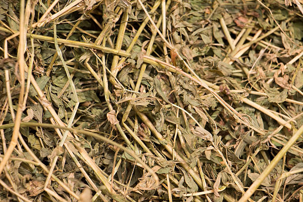 Alfalfa Hay stock photo