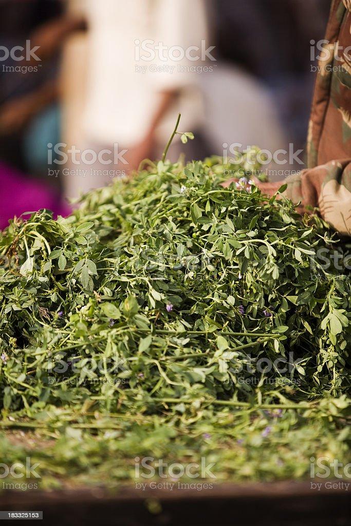 alfalfa stock photo