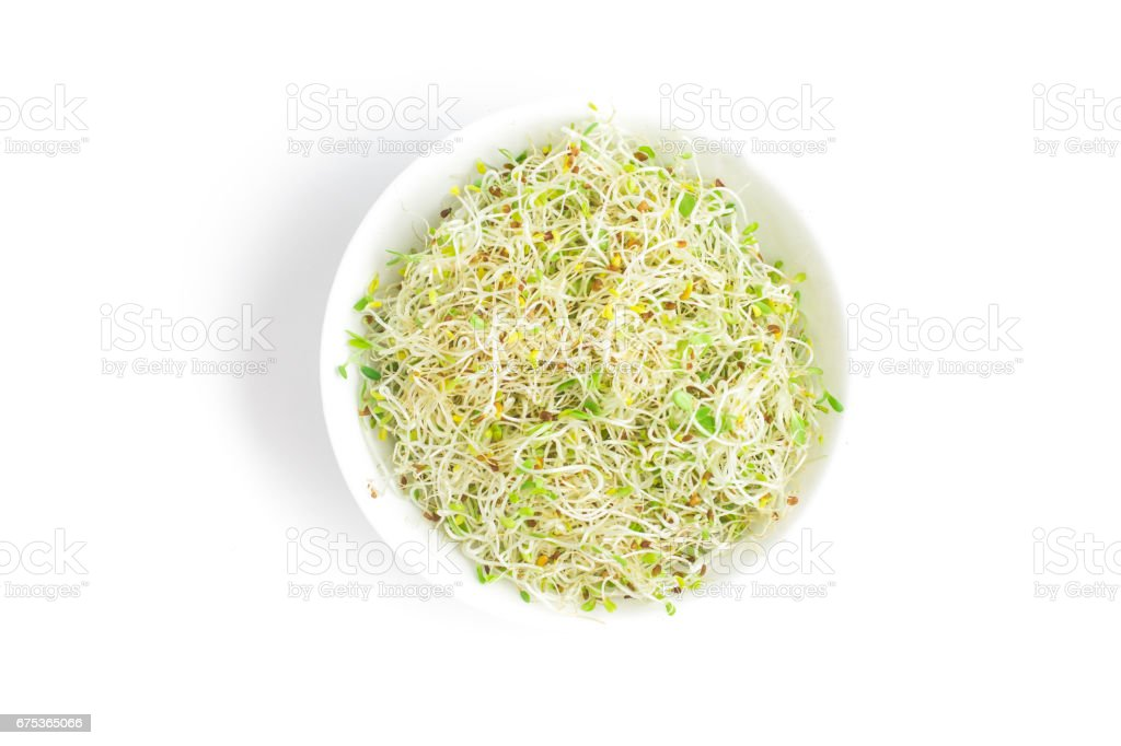 Alfalfa Sprouts into a bowl stock photo