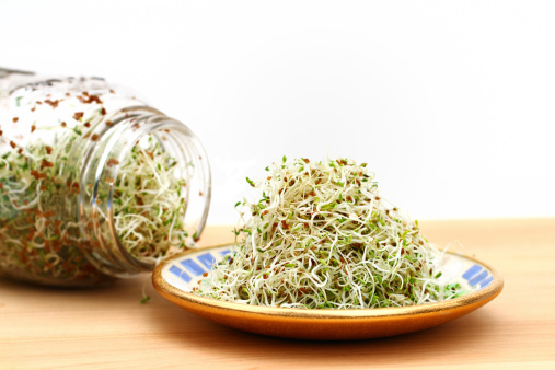A heap of freshly grown organic alfalfa sprouts is piled on a small saucer. In the background is the sprouting jar with more sprouts. Spouts are a good source of nutrition and can be used as an ingredient in salads, soups, breads or eaten raw by themselves.