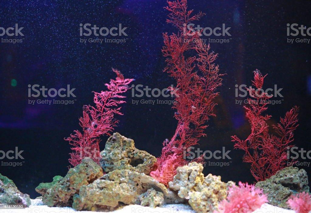 Alga y corales en el tanque de acuario. - foto de stock