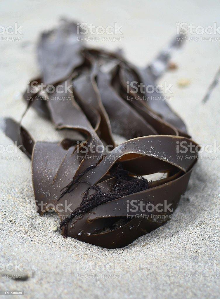 alga royalty-free stock photo