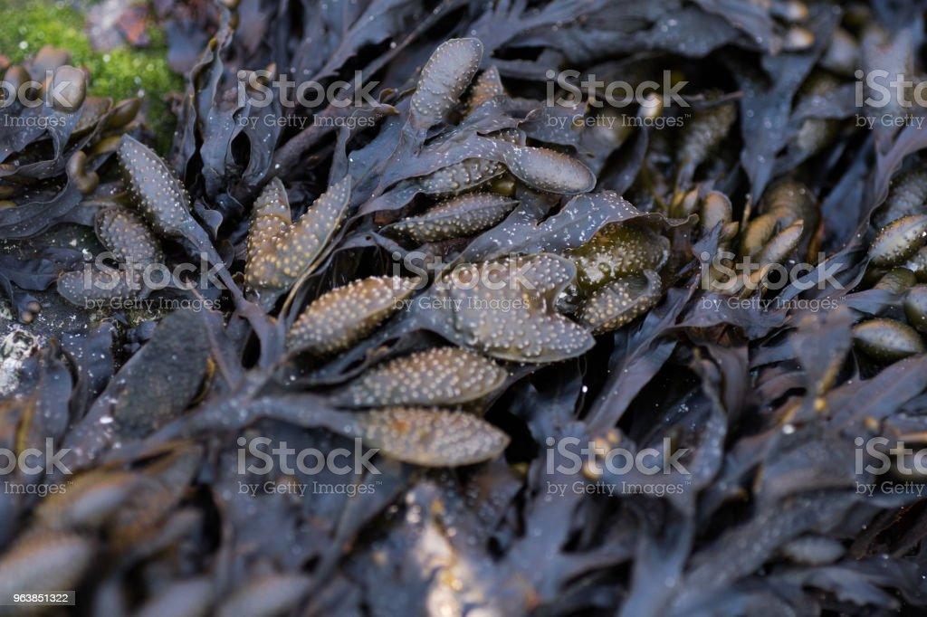 algae and moss pattern - Royalty-free Algae Stock Photo