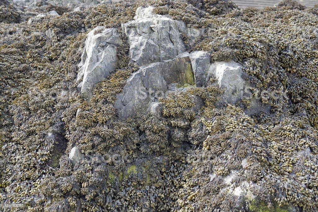 algae and rock formation royalty-free stock photo