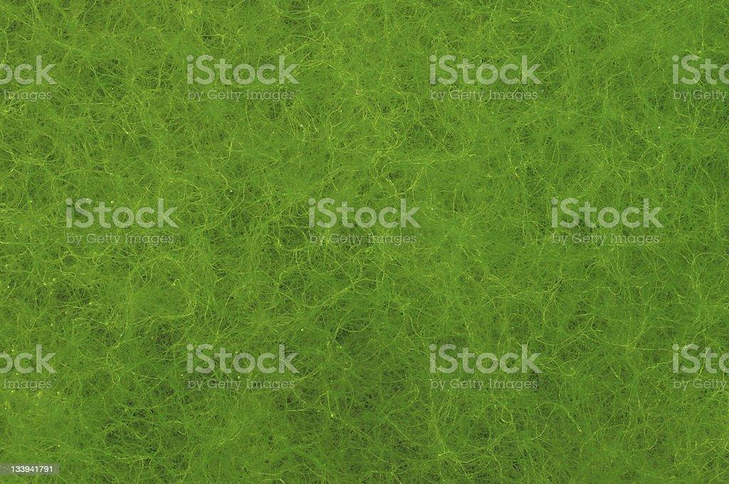 Algae Background royalty-free stock photo