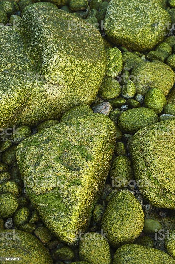 Rochas cobertas de algas foto royalty-free