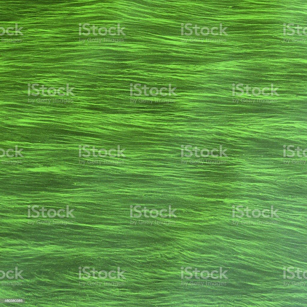 Algae green background stock photo