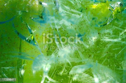 istock Algae Growth on Fish Tank 172356411