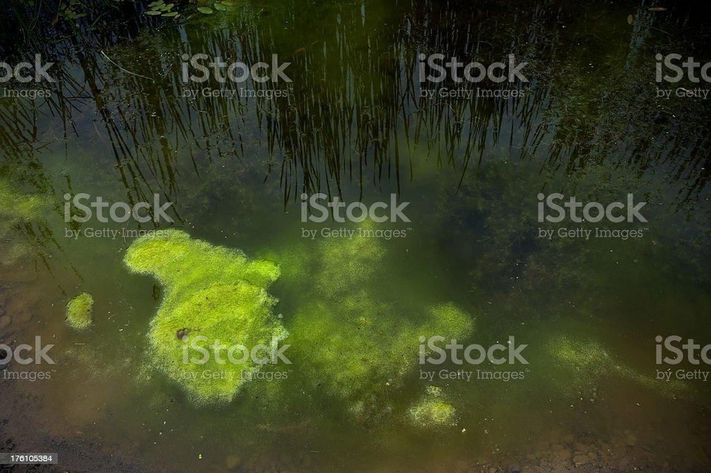 Algae Growth stock photo